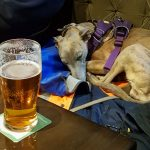 A sleeping dog in a pub, with a pint of bitter in front